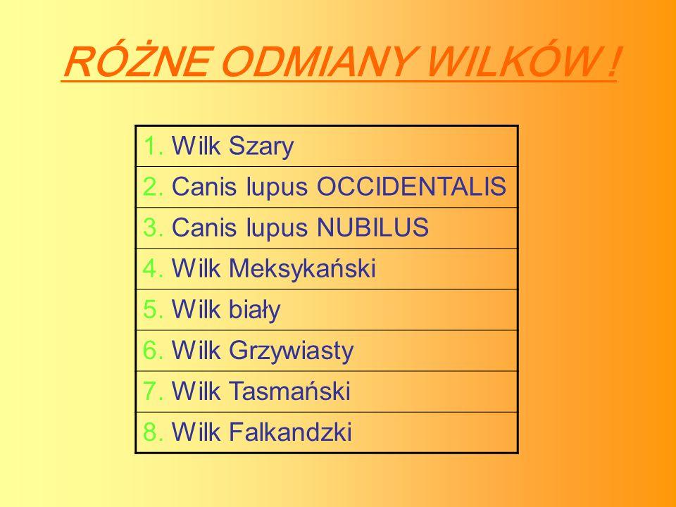 RÓŻNE ODMIANY WILKÓW ! 1. Wilk Szary 2. Canis lupus OCCIDENTALIS