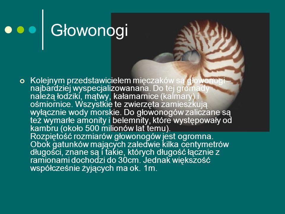 Głowonogi
