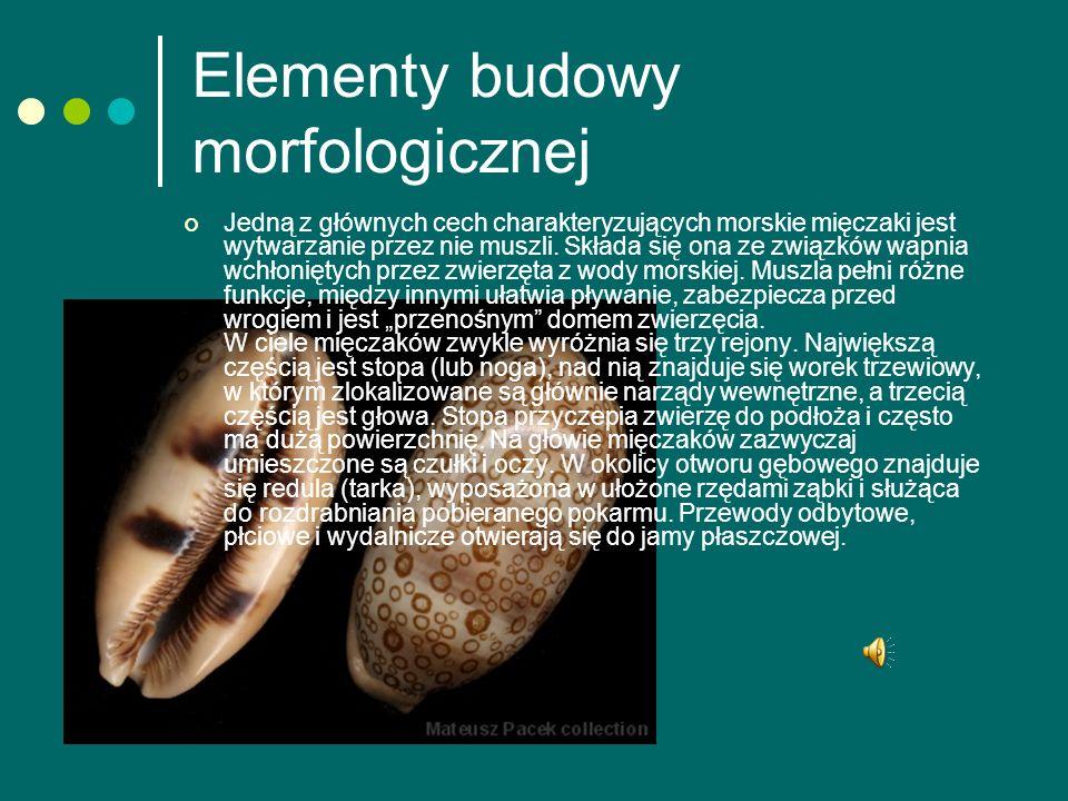 Elementy budowy morfologicznej