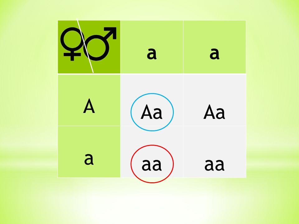 a A Aa aa