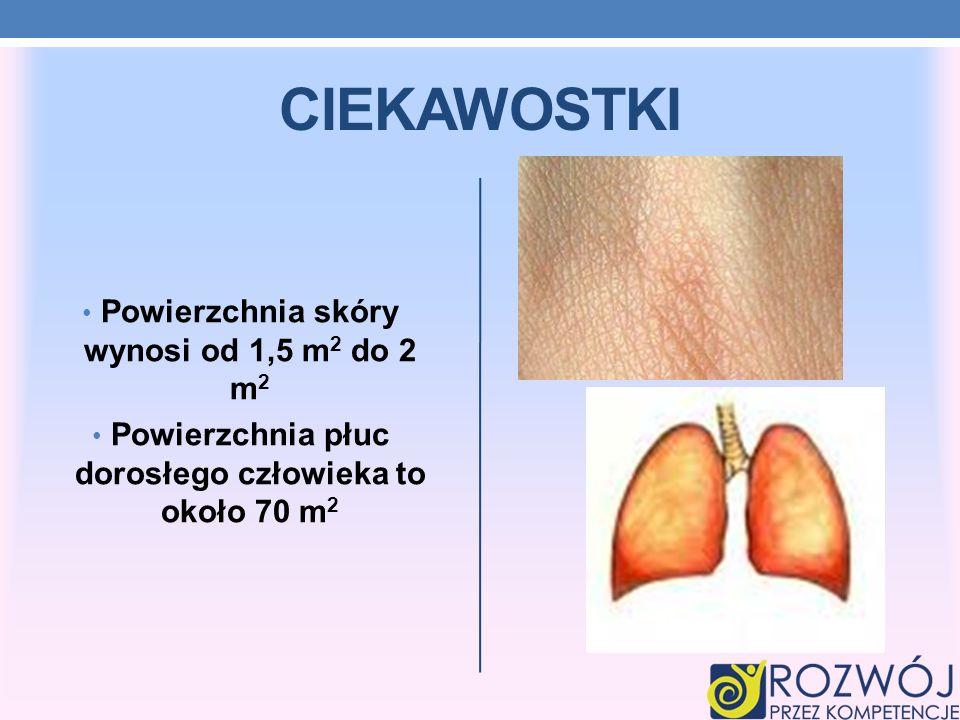 Powierzchnia skóry wynosi od 1,5 m2 do 2 m2