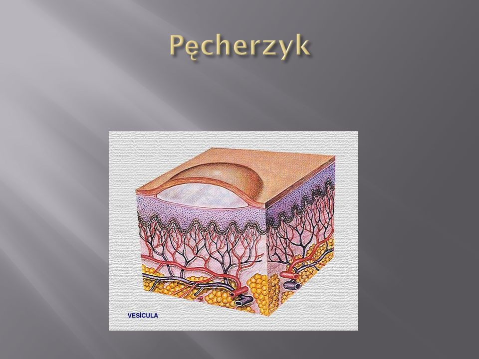 Pęcherzyk