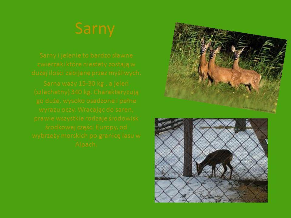 Sarny Sarny i jelenie to bardzo sławne zwierzaki które niestety zostają w dużej ilości zabijane przez myśliwych.