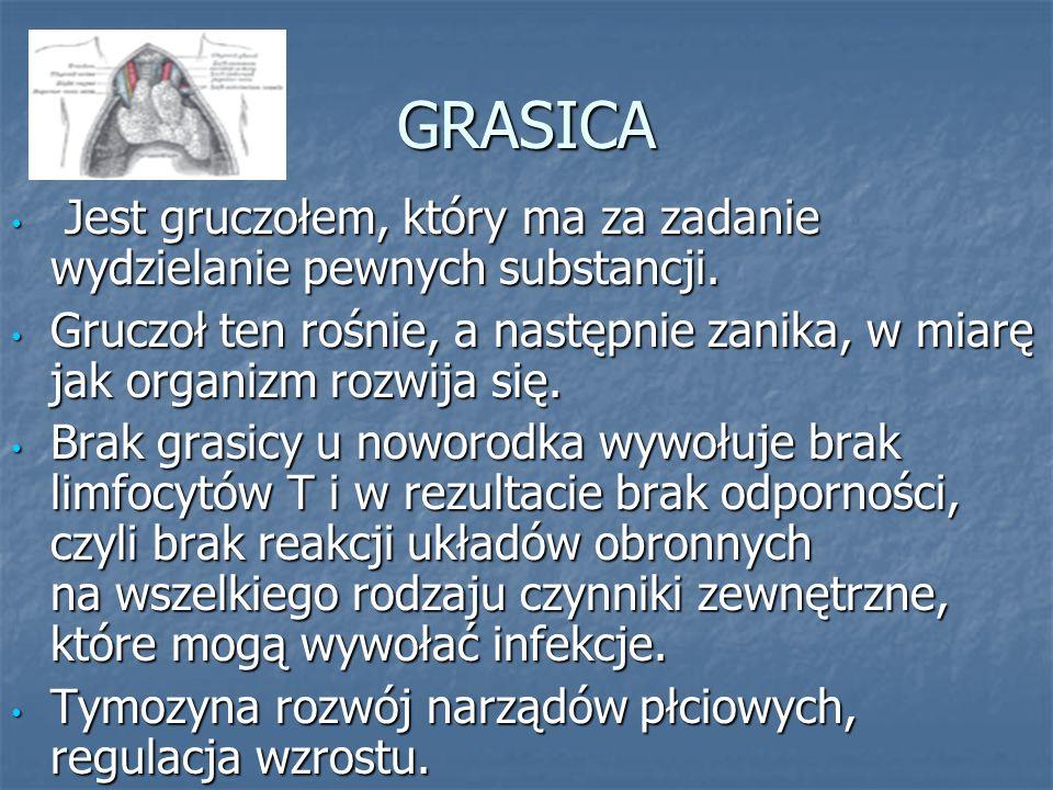 GRASICA Jest gruczołem, który ma za zadanie wydzielanie pewnych substancji.