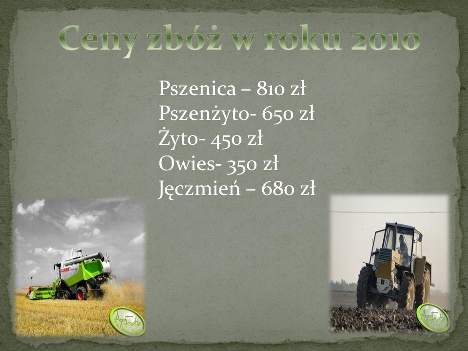 Ceny zbóż w roku 2010 Pszenica – 810 zł Pszenżyto- 650 zł Żyto- 450 zł