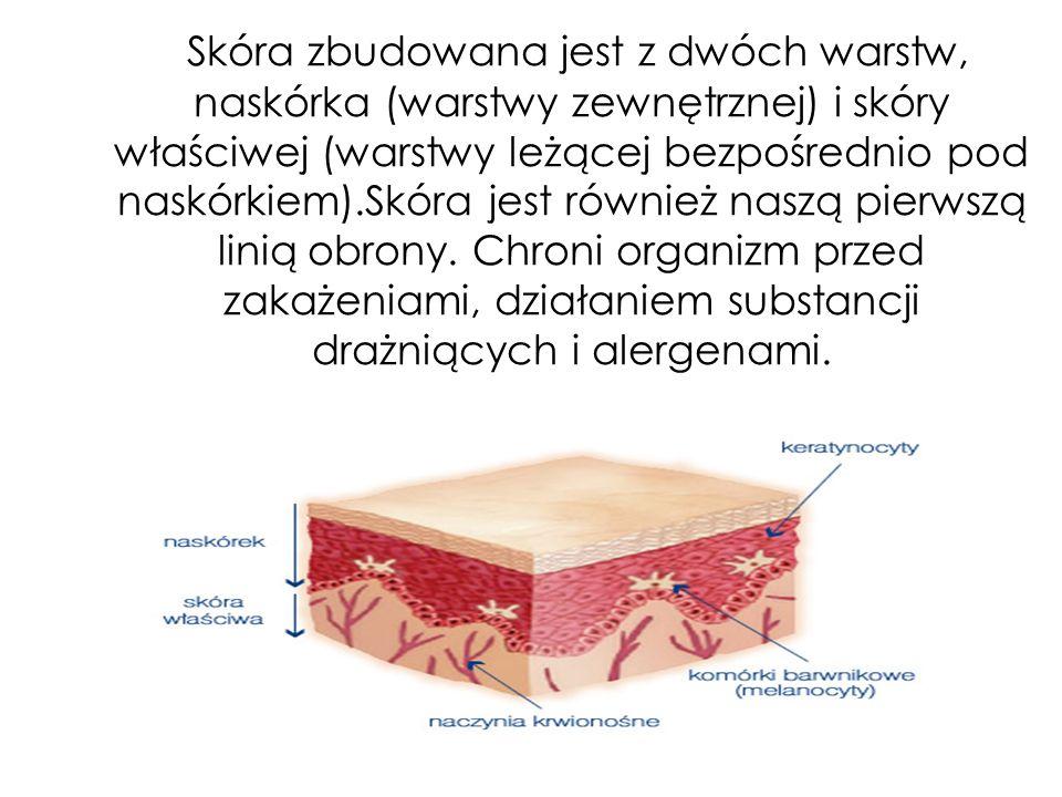 Skóra zbudowana jest z dwóch warstw, naskórka (warstwy zewnętrznej) i skóry właściwej (warstwy leżącej bezpośrednio pod naskórkiem).Skóra jest również naszą pierwszą linią obrony.