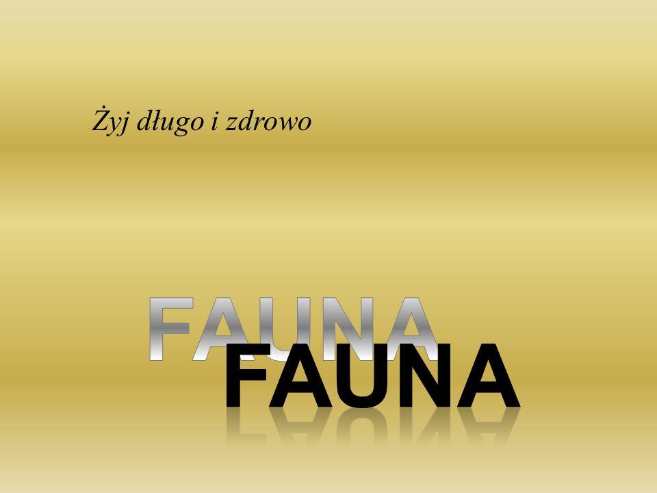 Żyj długo i zdrowo FAUNA FAUNA