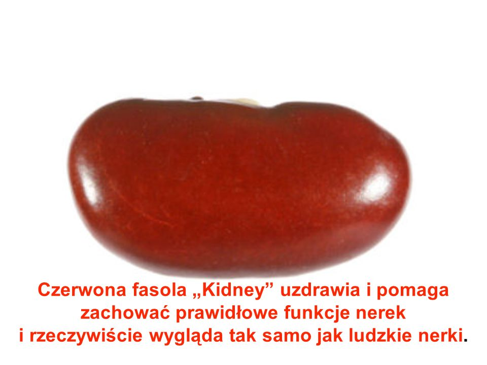 """Czerwona fasola """"Kidney uzdrawia i pomaga zachować prawidłowe funkcje nerek i rzeczywiście wygląda tak samo jak ludzkie nerki."""