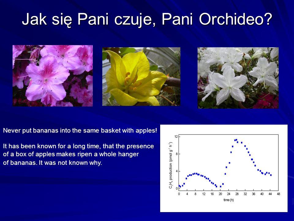 Jak się Pani czuje, Pani Orchideo