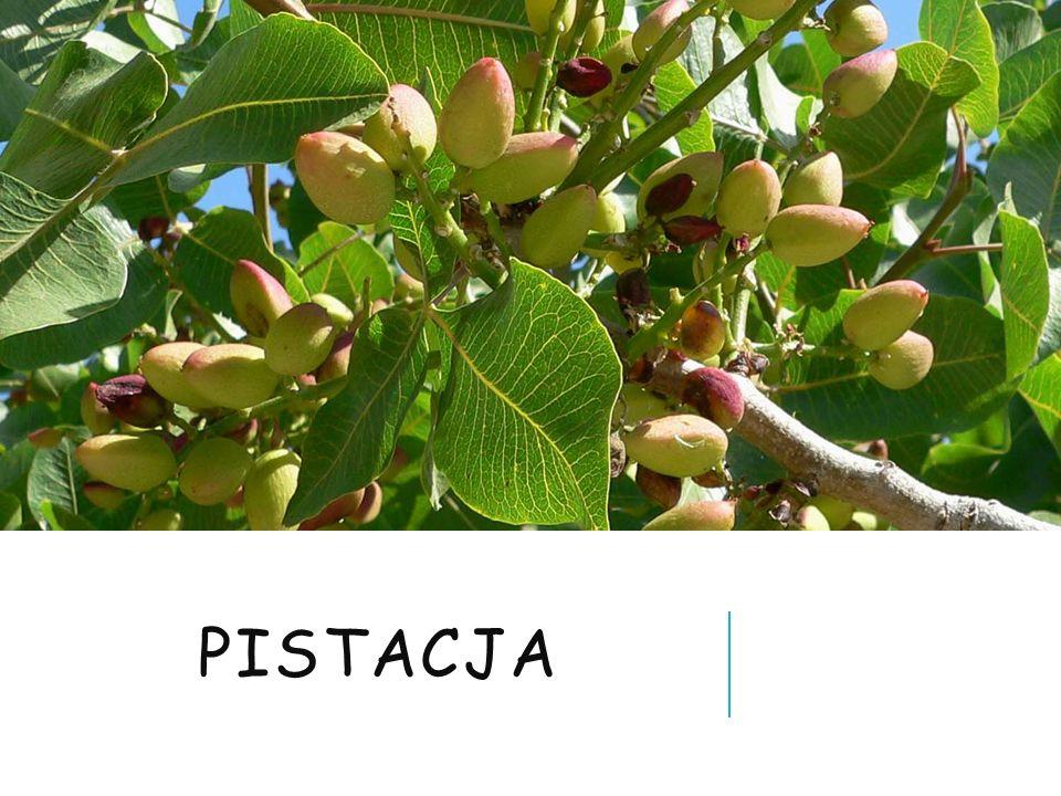 pistacja