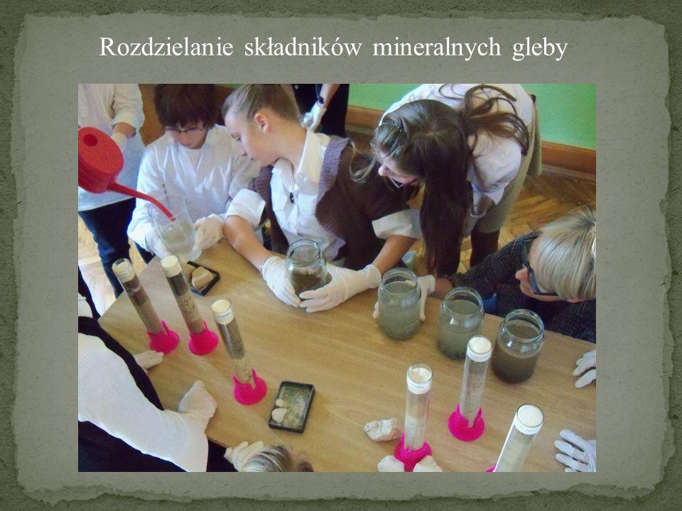 Rozdzielanie składników mineralnych gleby
