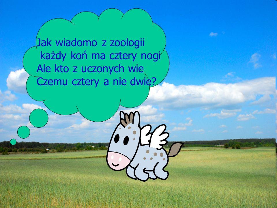 Jak wiadomo z zoologii każdy koń ma cztery nogi Ale kto z uczonych wie Czemu cztery a nie dwie