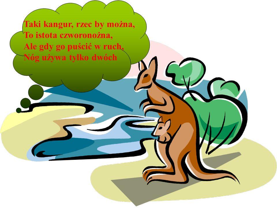 Taki kangur, rzec by można, To istota czworonożna, Ale gdy go puścić w ruch, Nóg używa tylko dwóch