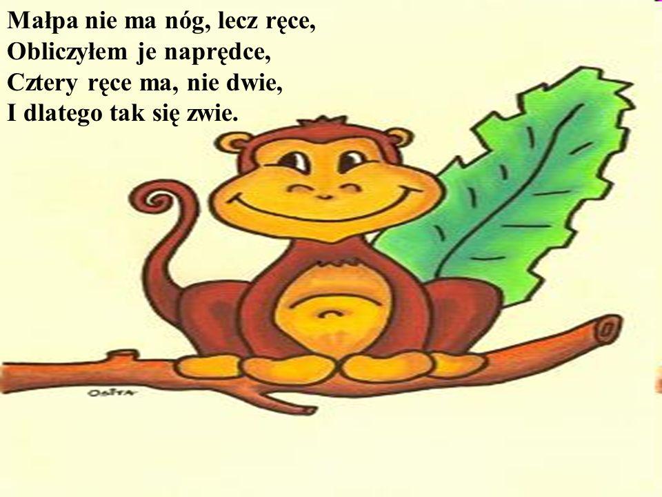 Małpa nie ma nóg, lecz ręce, Obliczyłem je naprędce, Cztery ręce ma, nie dwie, I dlatego tak się zwie.
