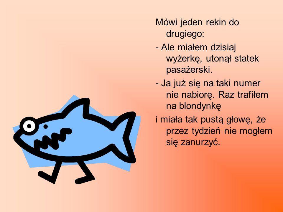 Mówi jeden rekin do drugiego: