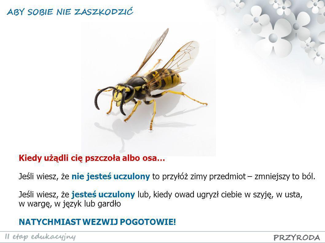 Kiedy użądli cię pszczoła albo osa…
