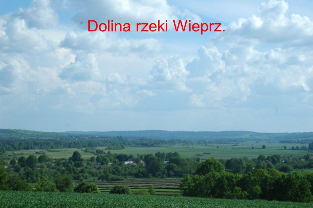 Dolina rzeki Wieprz.