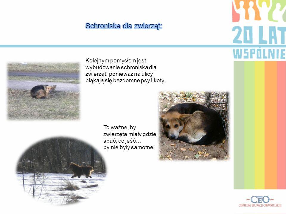 Schroniska dla zwierząt:
