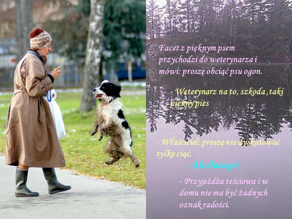 Facet z pięknym psem przychodzi do weterynarza i mówi: proszę obciąć psu ogon.