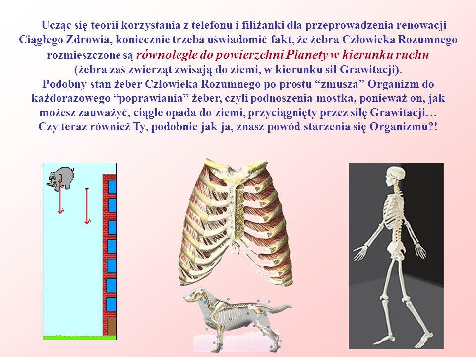 (żebra zaś zwierząt zwisają do ziemi, w kierunku sil Grawitacji).