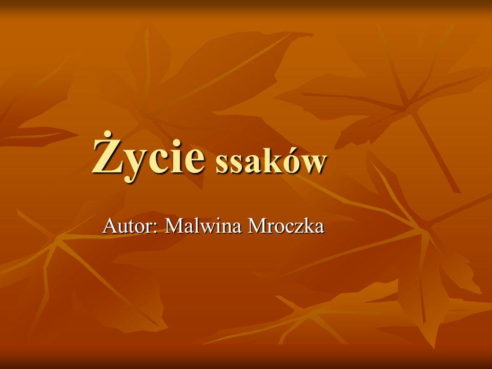 Autor: Malwina Mroczka