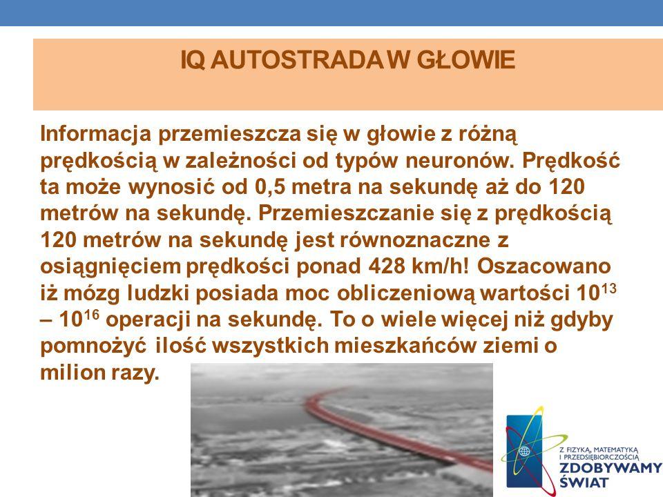 IQ autostrada w głowie