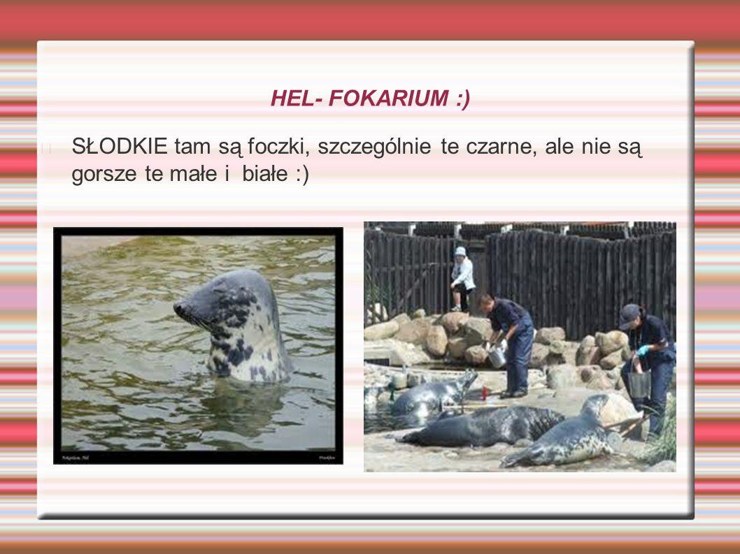 HEL- FOKARIUM :) SŁODKIE tam są foczki, szczególnie te czarne, ale nie są gorsze te małe i białe :)