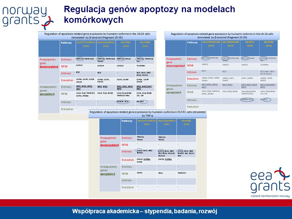 Regulacja genów apoptozy na modelach komórkowych