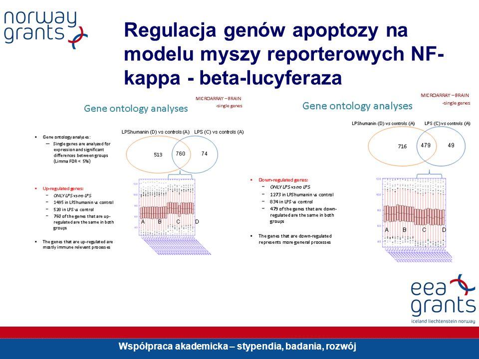 Regulacja genów apoptozy na modelu myszy reporterowych NF-kappa - beta-lucyferaza