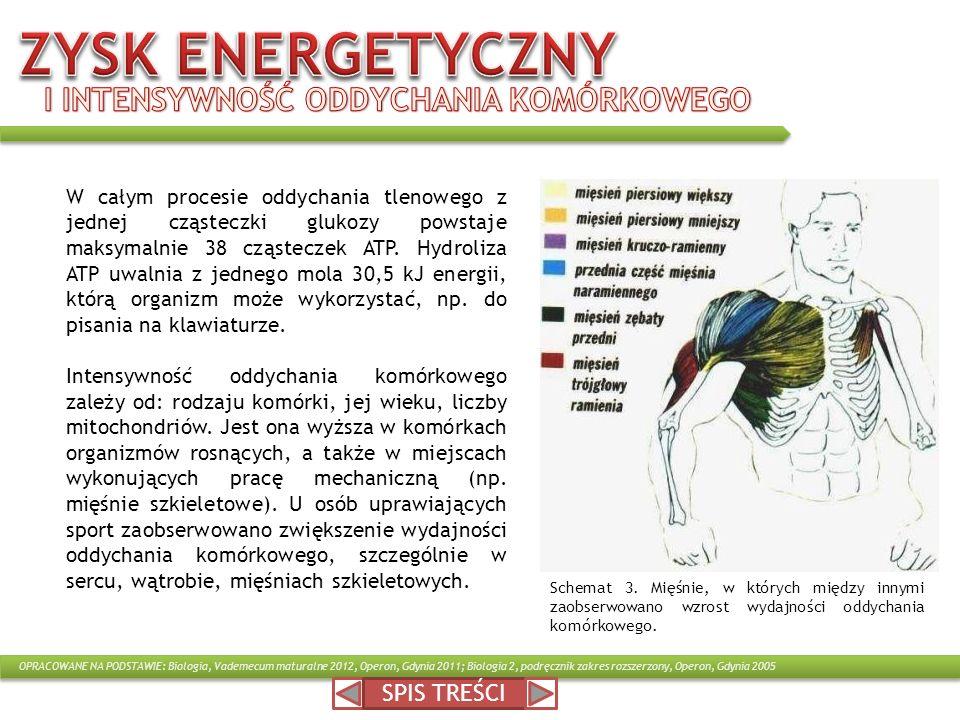 ZYSK ENERGETYCZNY I INTENSYWNOŚĆ ODDYCHANIA KOMÓRKOWEGO SPIS TREŚCI