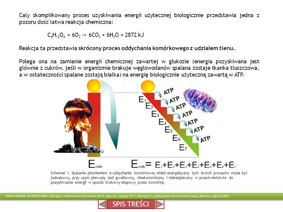 Cały skomplikowany proces uzyskiwania energii użytecznej biologicznie przedstawia jedna z pozoru dość łatwa reakcja chemiczna: