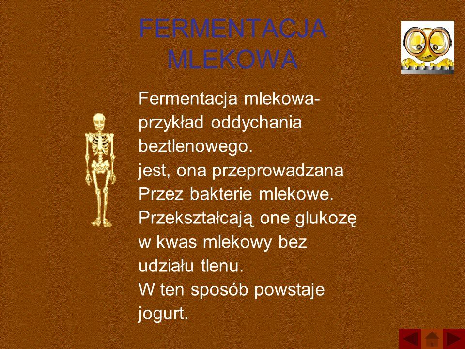 FERMENTACJA MLEKOWA Fermentacja mlekowa- przykład oddychania