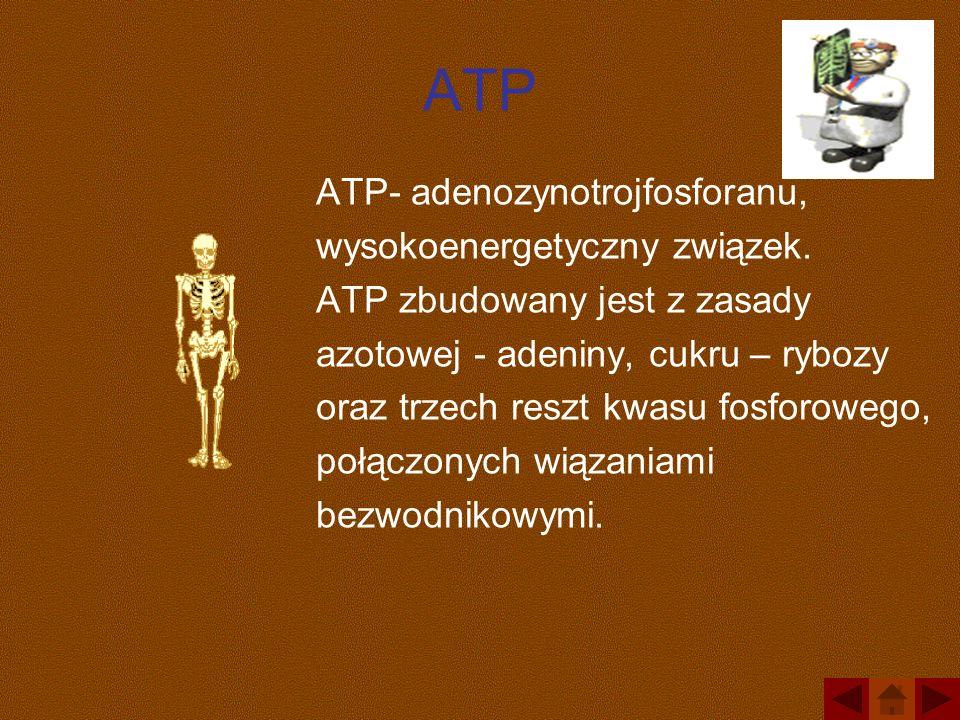 ATP ATP- adenozynotrojfosforanu, wysokoenergetyczny związek.
