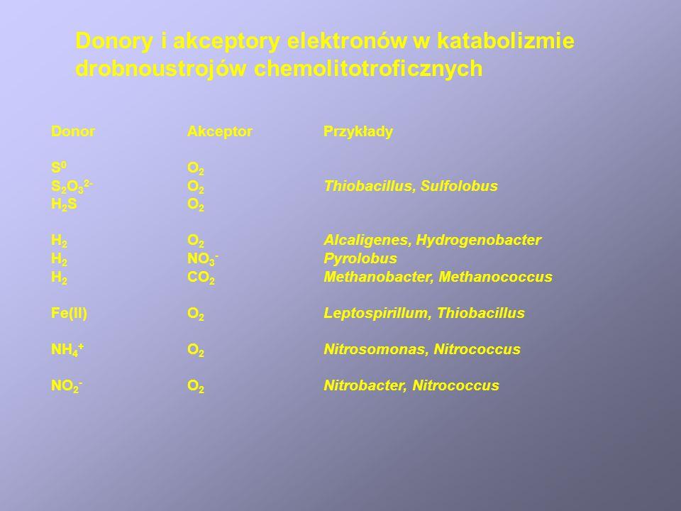 Donory i akceptory elektronów w katabolizmie