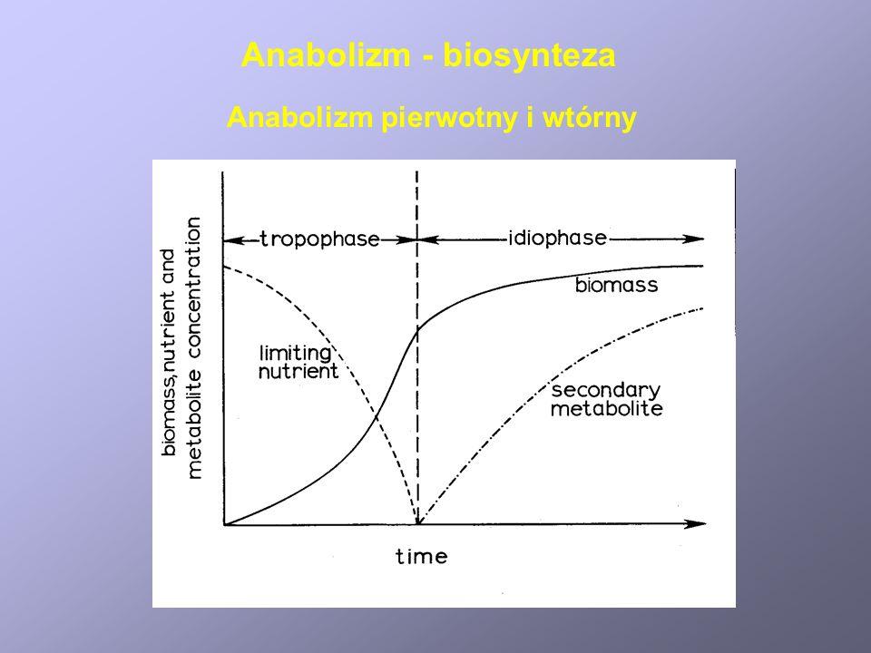 Anabolizm - biosynteza