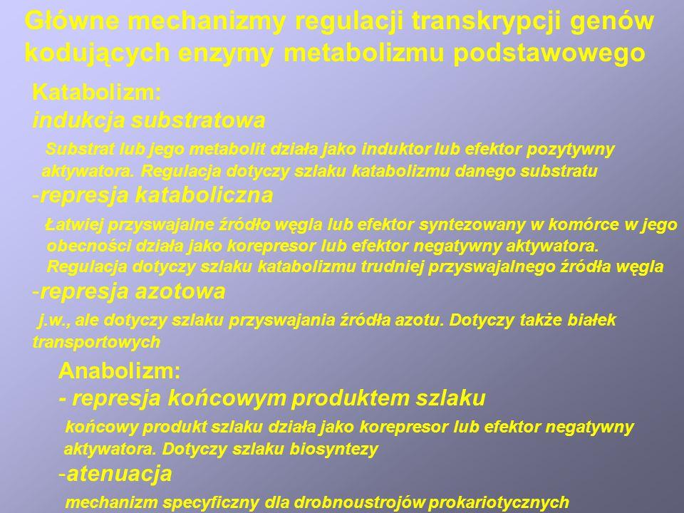 Główne mechanizmy regulacji transkrypcji genów