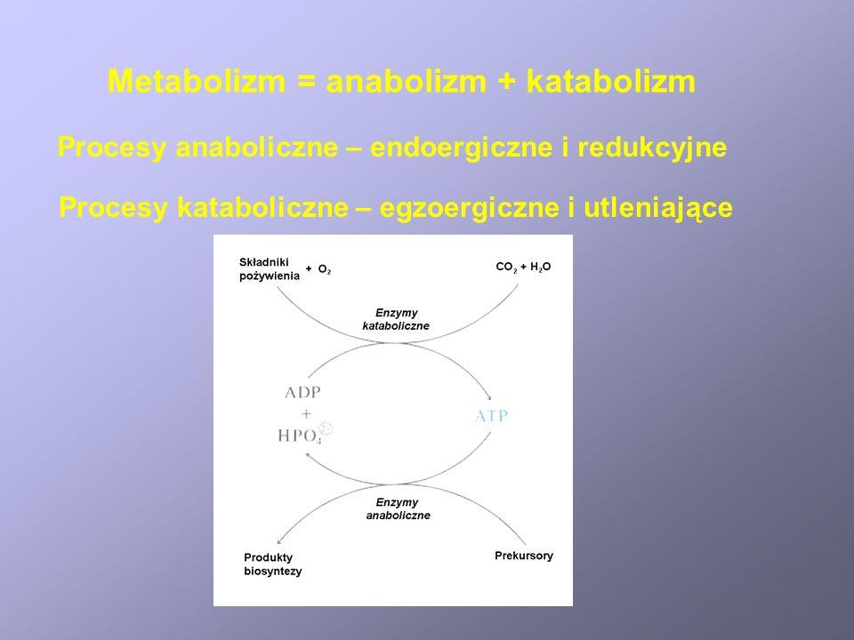 Metabolizm = anabolizm + katabolizm