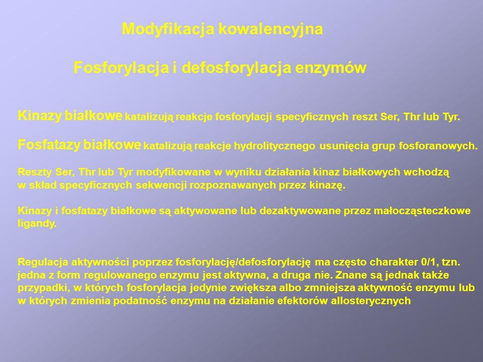 Modyfikacja kowalencyjna Fosforylacja i defosforylacja enzymów