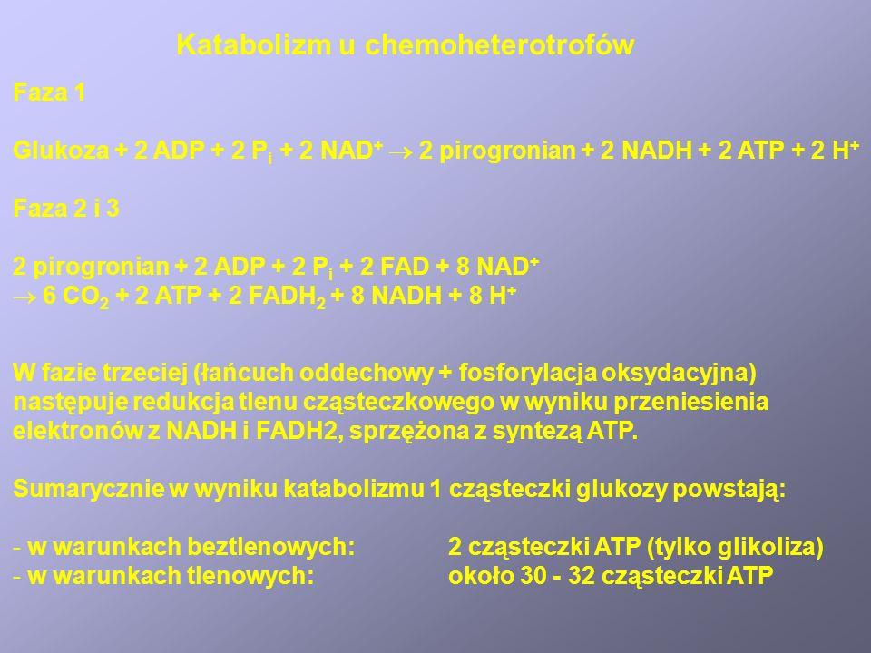Katabolizm u chemoheterotrofów