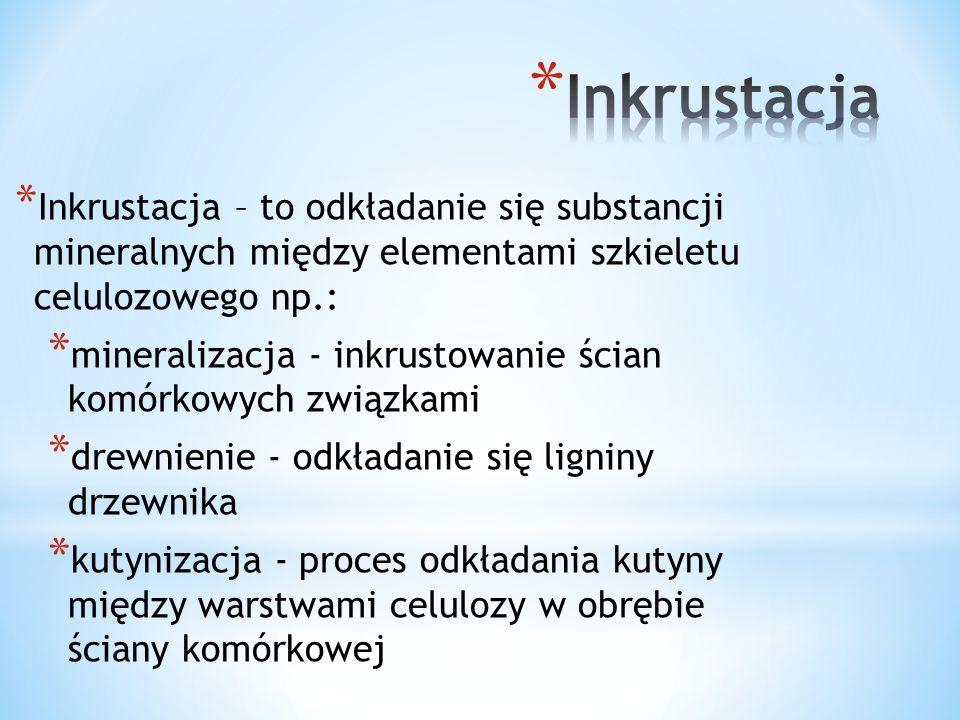 Inkrustacja Inkrustacja – to odkładanie się substancji mineralnych między elementami szkieletu celulozowego np.:
