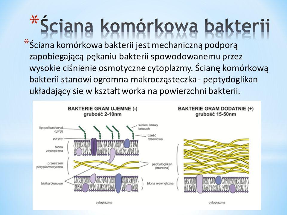 Ściana komórkowa bakterii