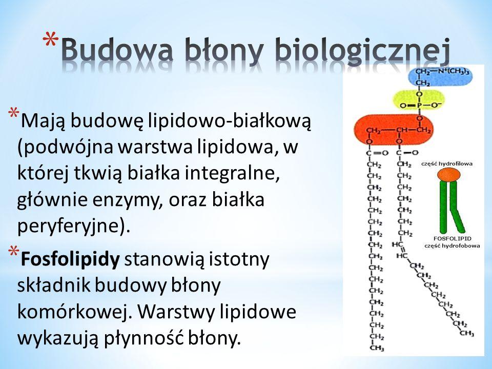 Budowa błony biologicznej