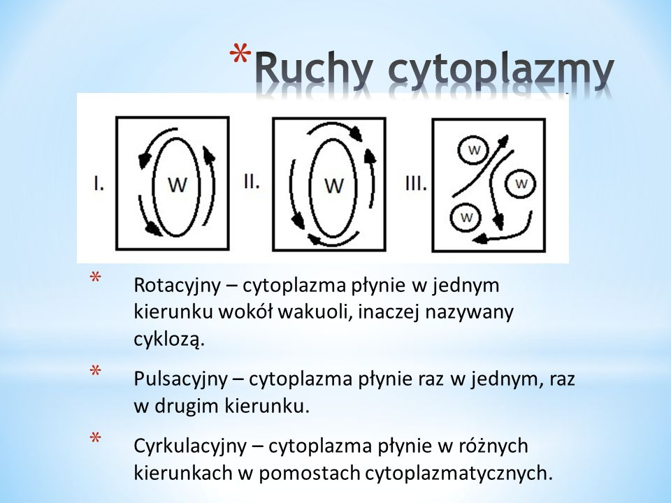 Ruchy cytoplazmy Rotacyjny – cytoplazma płynie w jednym kierunku wokół wakuoli, inaczej nazywany cyklozą.