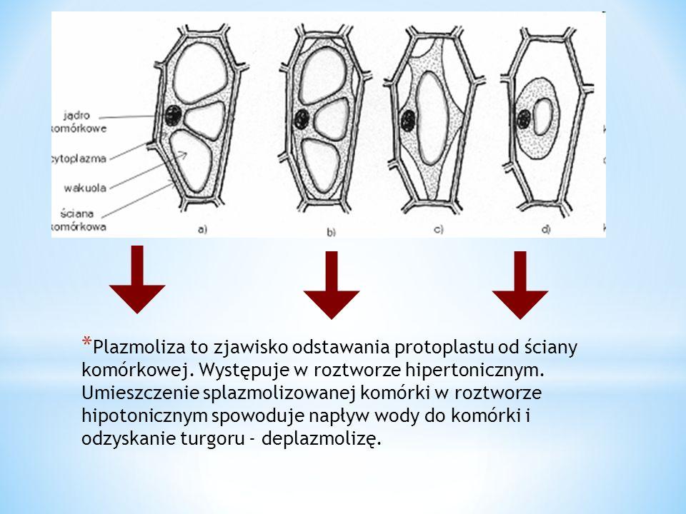 Plazmoliza to zjawisko odstawania protoplastu od ściany komórkowej
