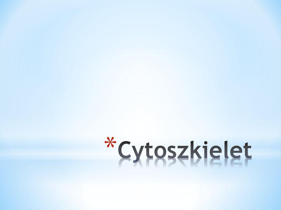 Cytoszkielet