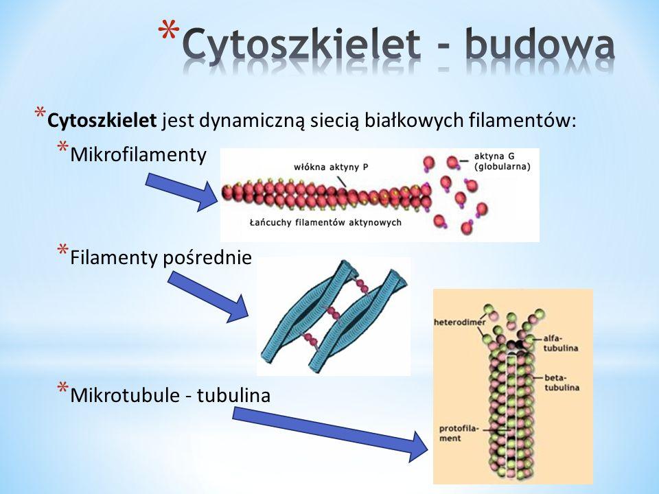 Cytoszkielet - budowa Cytoszkielet jest dynamiczną siecią białkowych filamentów: Mikrofilamenty. Filamenty pośrednie.