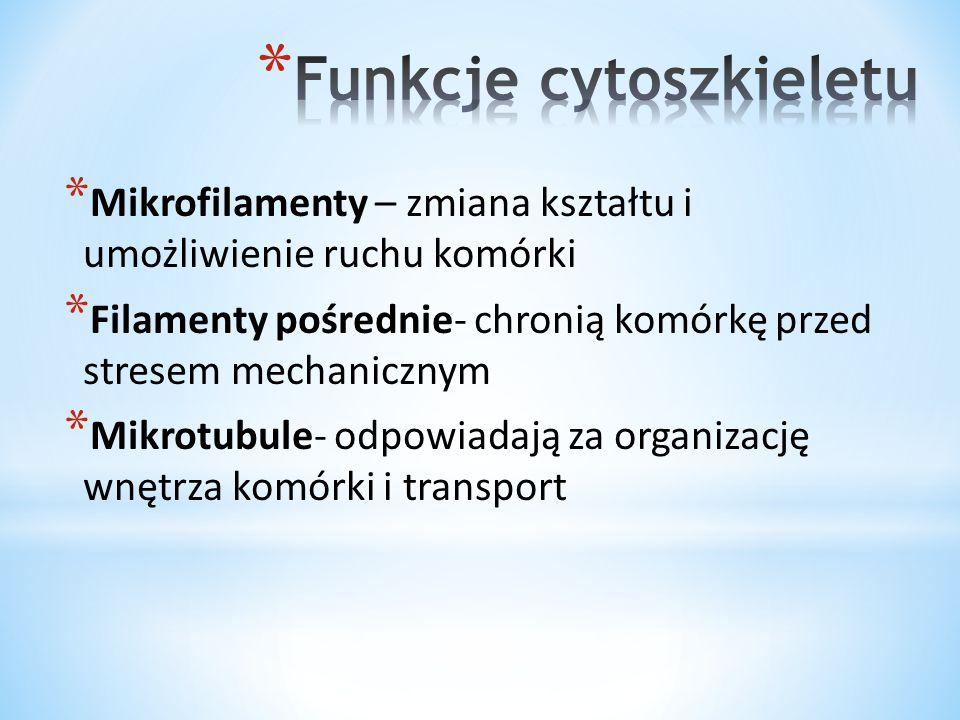 Funkcje cytoszkieletu