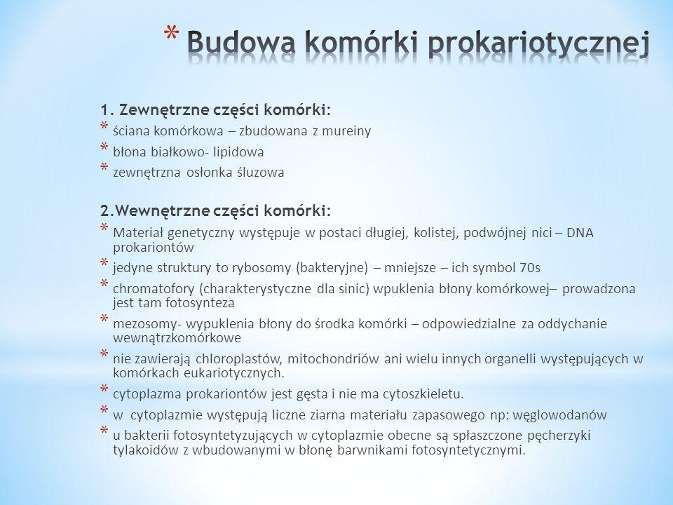 Budowa komórki prokariotycznej