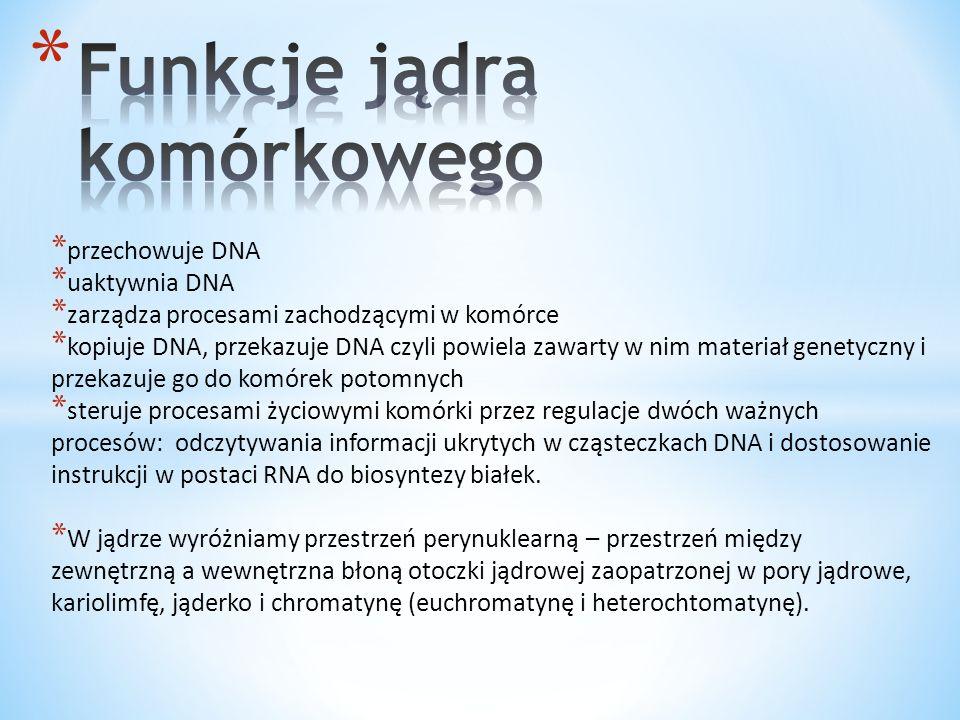 Funkcje jądra komórkowego