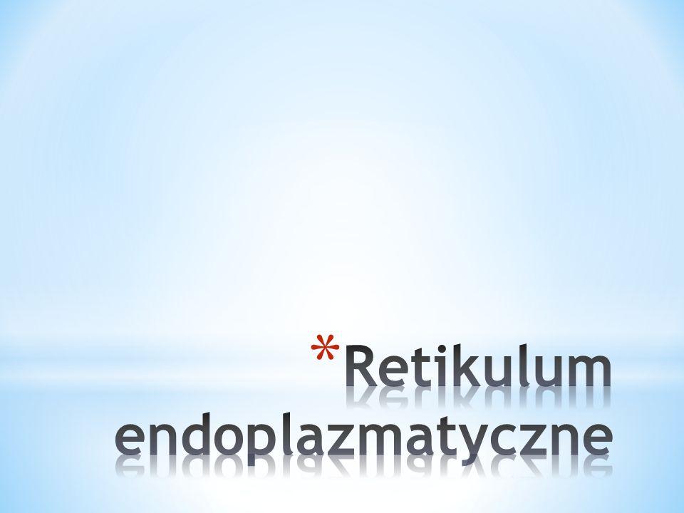 Retikulum endoplazmatyczne